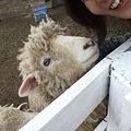 Photos: 羊さんとのショット♪