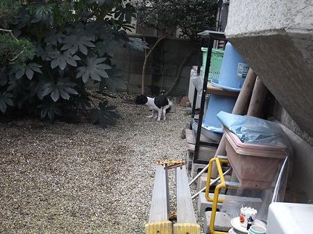お庭へ出すと、こっちゃんすかさずおしっこ&うんp