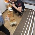 Photos: 幸太、お座り!
