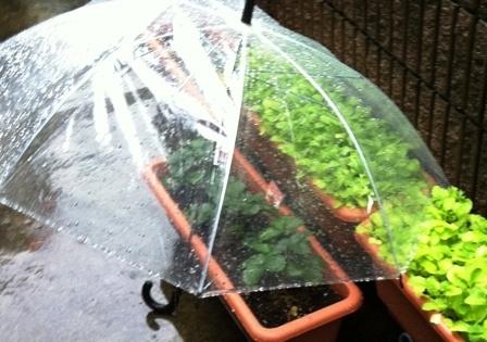 家庭菜園 傘
