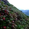 Photos: 赤と緑の植物