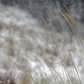 写真: 小雪舞う~風音