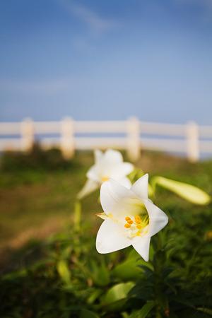 東で咲く花