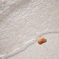 写真: ビーチの貝