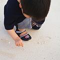 写真: 貝を拾う人