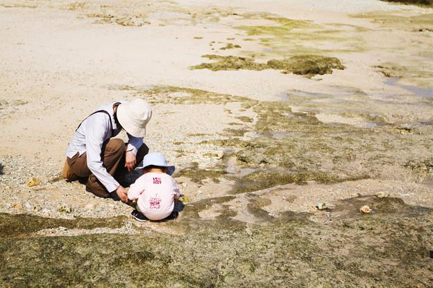 写真: 綺麗な貝を探す人
