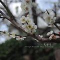 写真: 春の知らせ
