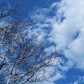 Photos: ~気持ちのいい青空~