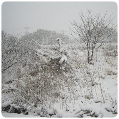 20120202 雪景色