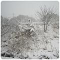 写真: 20120202 雪景色