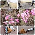 20120409 鞍ケ池公園で父とお散歩