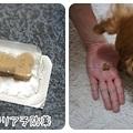 20120501 フィラリア予防薬