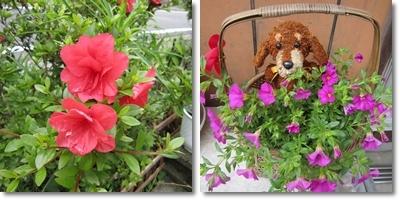 20110611 お花2
