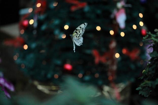 キラキラ  夜のチョウ?