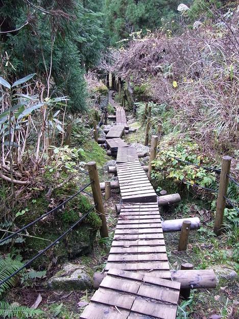 Photos: 洞杉へのアプローチ路