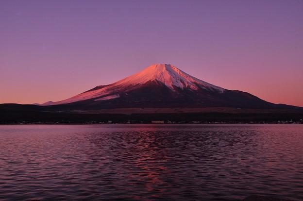 燃え上がるような富士・・・