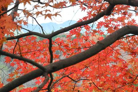 津風呂湖の紅葉2011-2
