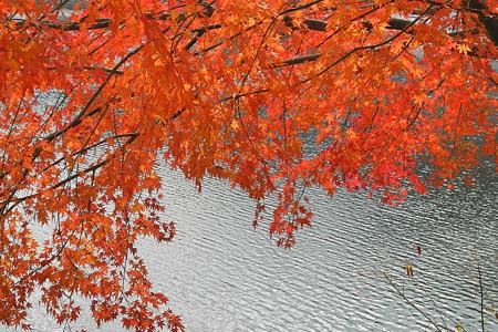 津風呂湖の紅葉2011-3