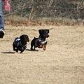 写真: ナギ、バジル