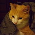Photos: ガウンと猫