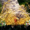 Photos: 夜桜@としまえん