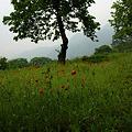 写真: 里山を見守る