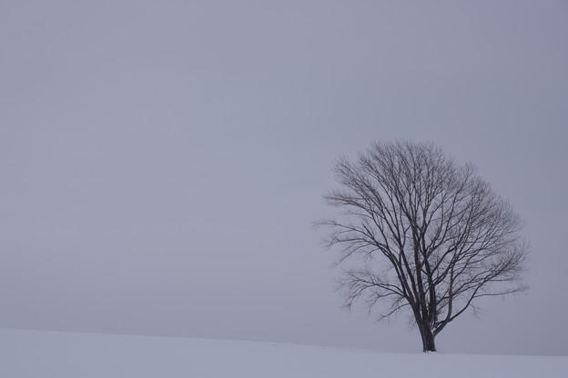 写真: 20111225_113036_0